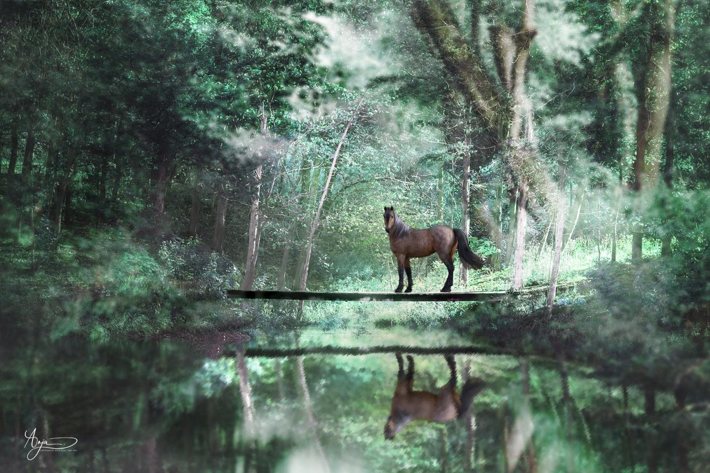 Pferd auf Brücke6