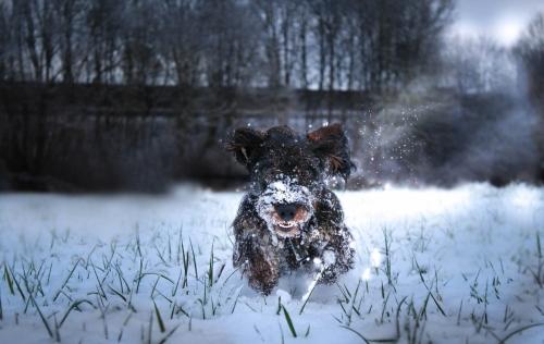 Brutus Schnee01 Kopie
