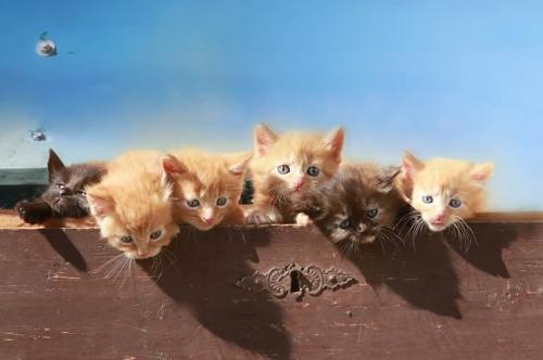 Kitten Truhe Kopie