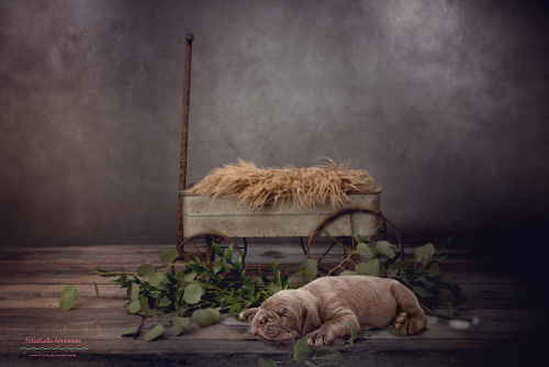Puppy1 Titelbild